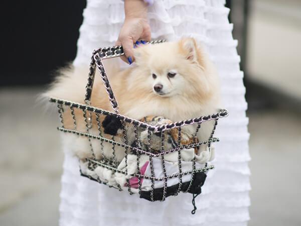 寵物包裝托運