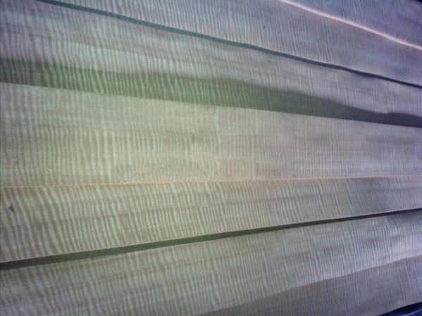 紅影排骨影木皮
