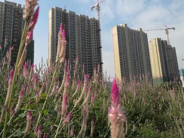 東莞東城凱晟景園改造項目