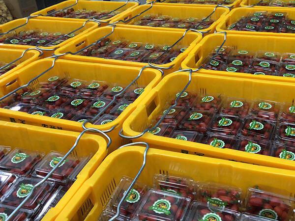 西红柿配送