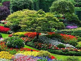 植物树木花卉百科工程