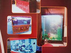 许昌划算的实木雕刻鱼缸【供销】:便宜的实木雕刻鱼缸