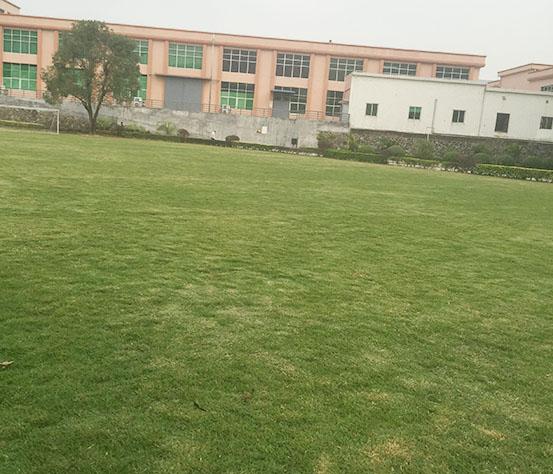 天然草坪足球场设计