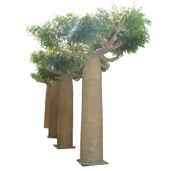 包柱大榕树