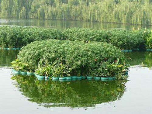 石龍使水質變清生態修復供應商 興森環保