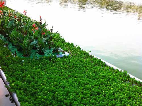 沙田使水质变清生态修复市场 兴森环保 河水 低耗能 河道治理