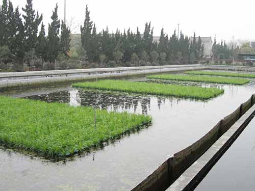 中山景观水生态修复底泥 兴森环保 景观水 农村 低耗能 污水