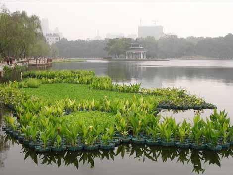 東莞景觀水生態修復特點 興森環保 河道 河水 農村 濕地 低耗能