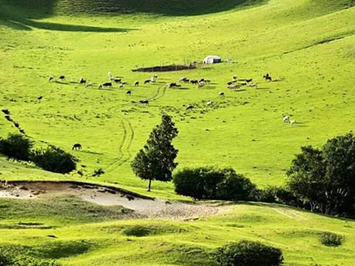 草原牧羊实景